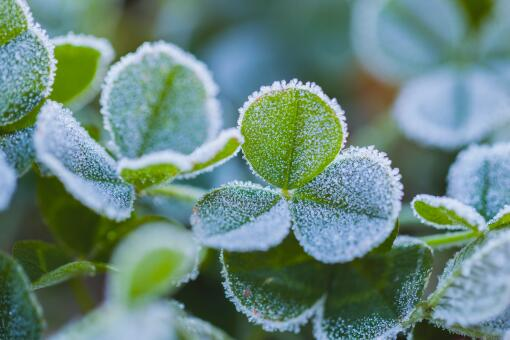 每年寒露是什么温度?是几月几日?和白露有啥区别?