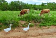 2020年养殖用地有规定吗?具体政策有哪些?