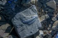 福州海关查获侏罗纪化石:藏在快递里!过海关允许带化石吗?