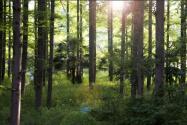 最新林权改革政策!林权流转的方式有哪几种?