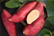农业专家用牵牛花嫁接出空中红薯!具体是怎么嫁接的?神奇到你意想不到!