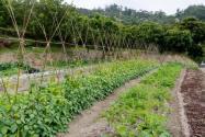 河北丰润数百亩耕地里种树!具体是怎么回事?农村耕地可以种树林吗?附详情!