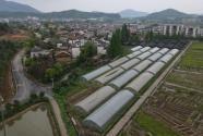 江西新余市渝水区下村镇农业项目地块超长年限真实国产乱子伦对白视频