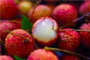 荔枝品种有哪些?最好的前三个品种是什么?荔枝品种大全来啦!