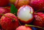 现在荔枝市场价多少钱一斤?2021年的荔枝行情怎样?