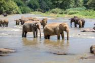 小象花式撒娇叫大象起床!具体是怎么回事?附事件始末详情!