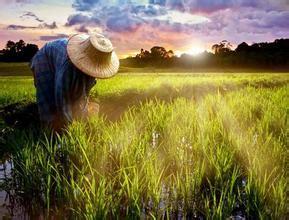 农村土地流转程序