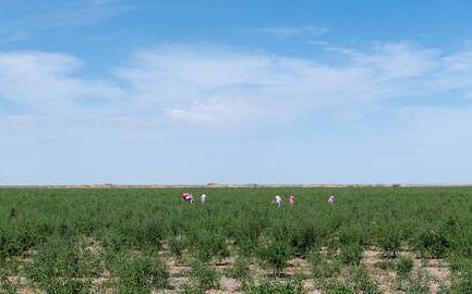 2020年种植业工作要点