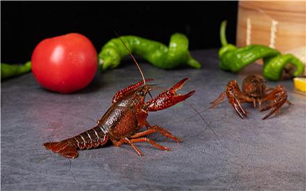 2021小龙虾价格多少钱一斤?