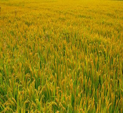 2021年强农惠农政策及历年回顾