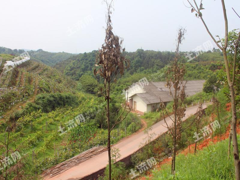 四川泸州aaaa级风景区天仙洞风景区内 45亩 果园 出租