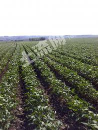 呼伦贝尔莫力达瓦达斡尔族自治旗20000亩旱地出租