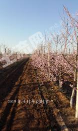 青岛莱西市 108亩 其它耕地 转让