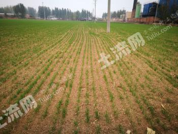 邢台沙河市42亩水浇地出租