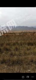 大同广灵县2000亩有林地出租合作养鹅林下养鹅草很多