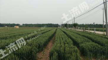 濮阳濮阳县 200亩 水浇地 出租
