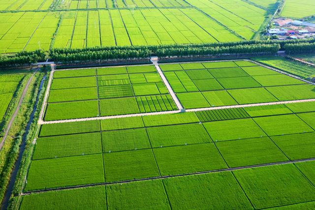 占用基本农田搞开发 你必须知道的政策(一)