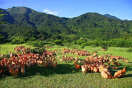 2015年8个农村养殖致富项目推荐!