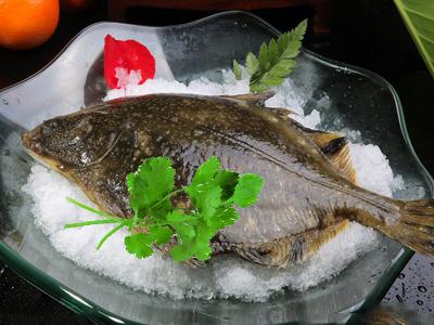 鸦片鱼原产地在大西洋北部 黄、渤海是中国鸦片鱼主产地
