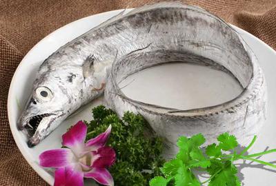 带鱼主产地在西太平洋和印度洋 中国沿海各省均有带鱼产地