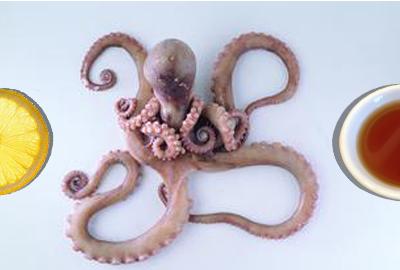 鱿鱼产地集中在中国南海 美国工具部海疆也有鱿鱼产地