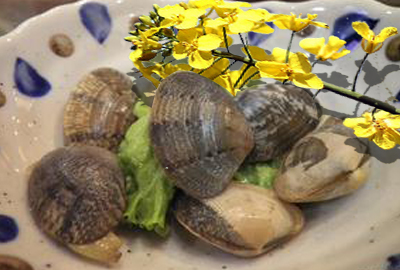 蛤蜊主产地在我国沿海地域 优质蛤蜊产地首推山东和辽宁