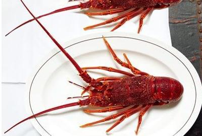 龙虾原产地在墨西哥东北部 中国南北均有大型龙虾产地