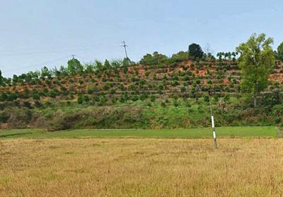 《全国种植业结构调整规划》 中的品种结构调整重点