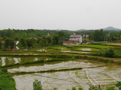 农业部:深化农村改革 推进农业现代化