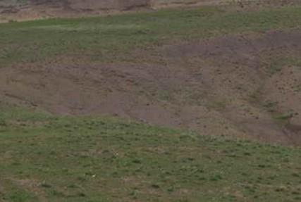 分析草地植物變化與草地退化的關系?