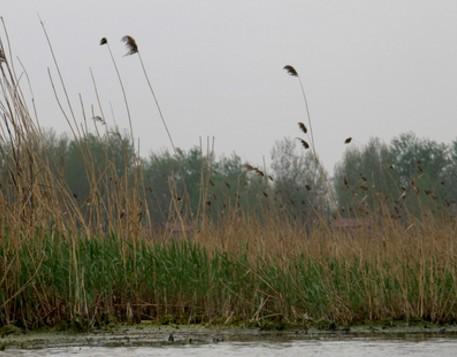 济南市湿地保护条例