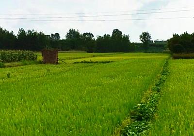 2016洪江市关于快培育发展家庭农场的意见