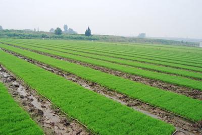 农村合作社如何通过土地流转、土地托管等手段使农民增收致富?