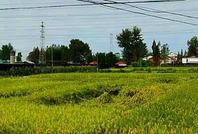 2016南京市浦口区出台关于促进家庭农场发展的意见