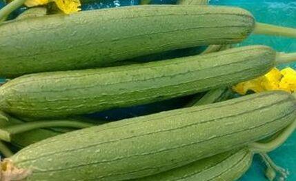 絲瓜是什麽科植物?絲瓜種植方法是怎麽樣的?