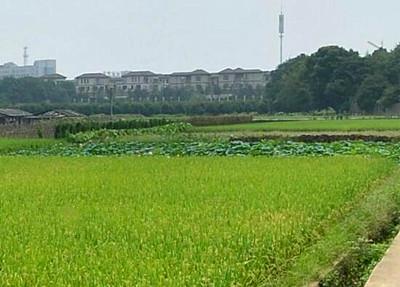 """巢湖市""""十三五""""现代农业发展规划(2016-2020年)"""