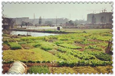 汙染土壤的植物修複及其特點是什麽?