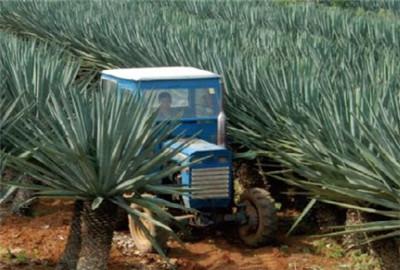农垦现代化发展