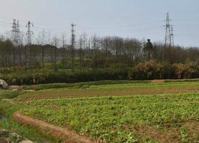 """重庆市农业农村发展""""十三五""""规划 中"""