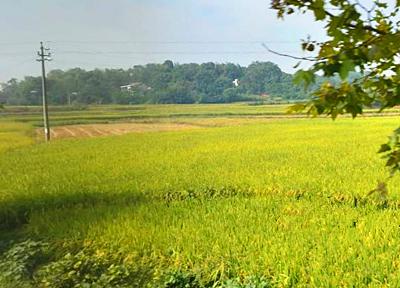 成都市如何推进农业标准化?