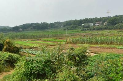 黑龙江玉米深加工企业补贴标准正式出台