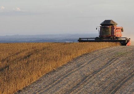 大豆播种面积