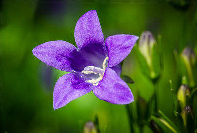 风信子开花后怎么繁殖图片