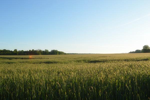 我市13.7万亩冬小麦推广节水稳产配套技术