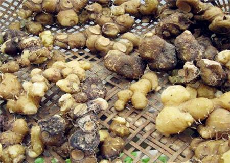 黄精种植几年可以采收?黄精的市场前景