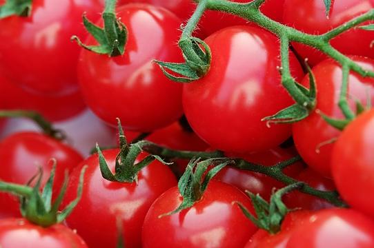 西红柿从开花到成熟要多久?其什么季节最好吃?