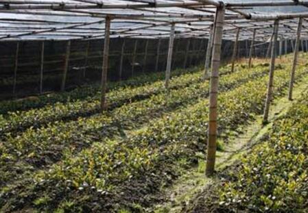 怎样通过产业振兴增加农民收入?你需要知道这些!