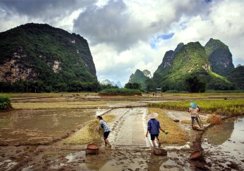 种稻子的水田地