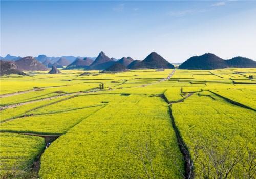 种稻子的土地
