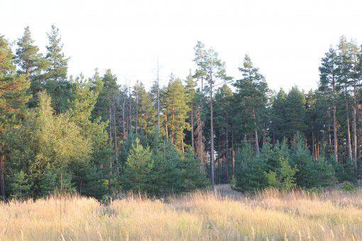 占用林地多少亩违法